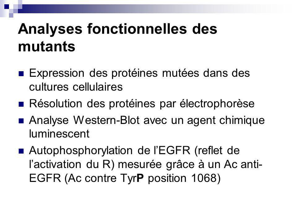 Analyses fonctionnelles des mutants Expression des protéines mutées dans des cultures cellulaires Résolution des protéines par électrophorèse Analyse Western-Blot avec un agent chimique luminescent Autophosphorylation de lEGFR (reflet de lactivation du R) mesurée grâce à un Ac anti- EGFR (Ac contre TyrP position 1068)