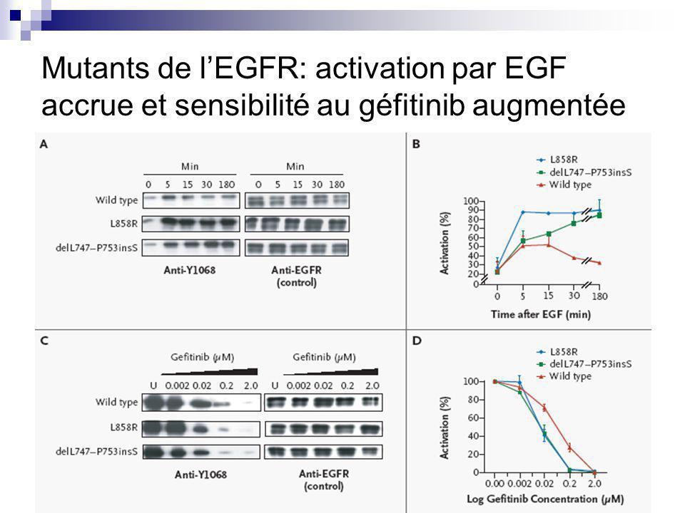 Mutants de lEGFR: activation par EGF accrue et sensibilité au géfitinib augmentée