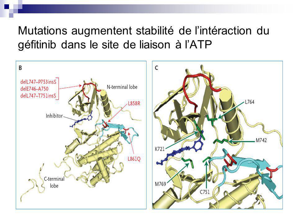 Mutations augmentent stabilité de lintéraction du géfitinib dans le site de liaison à lATP