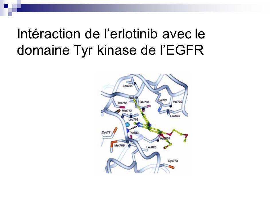 Intéraction de lerlotinib avec le domaine Tyr kinase de lEGFR
