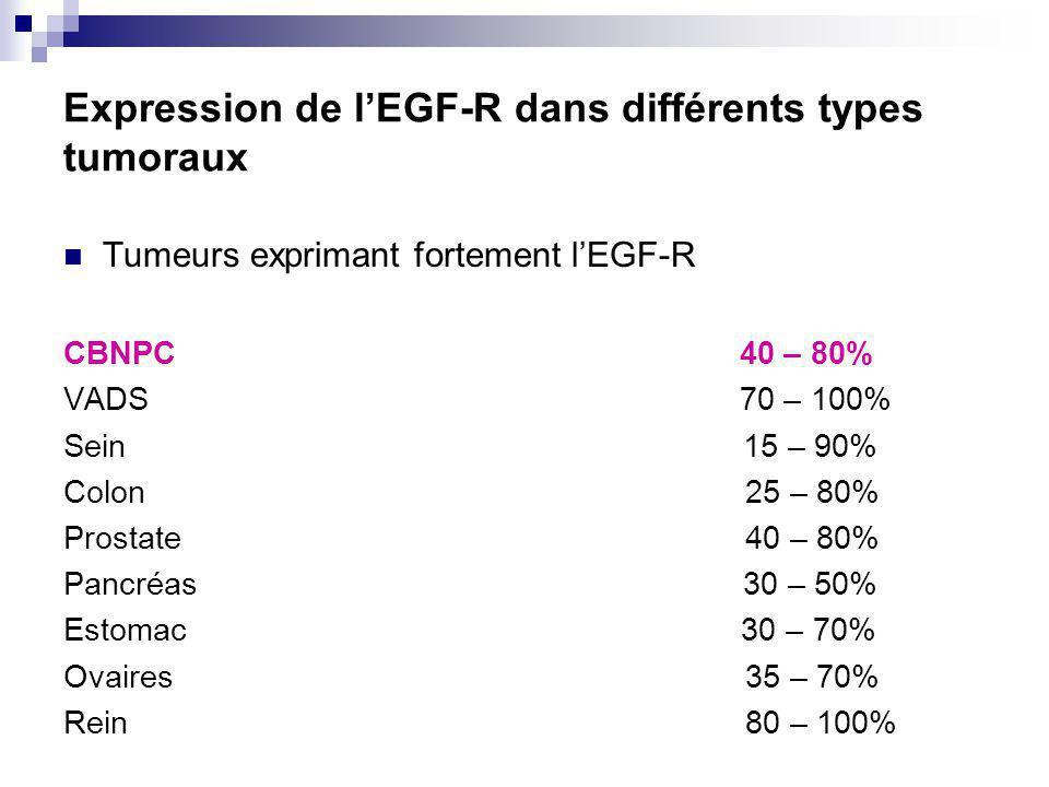 Expression de lEGF-R dans différents types tumoraux Tumeurs exprimant fortement lEGF-R CBNPC 40 – 80% VADS 70 – 100% Sein 15 – 90% Colon 25 – 80% Prostate 40 – 80% Pancréas 30 – 50% Estomac 30 – 70% Ovaires 35 – 70% Rein 80 – 100%