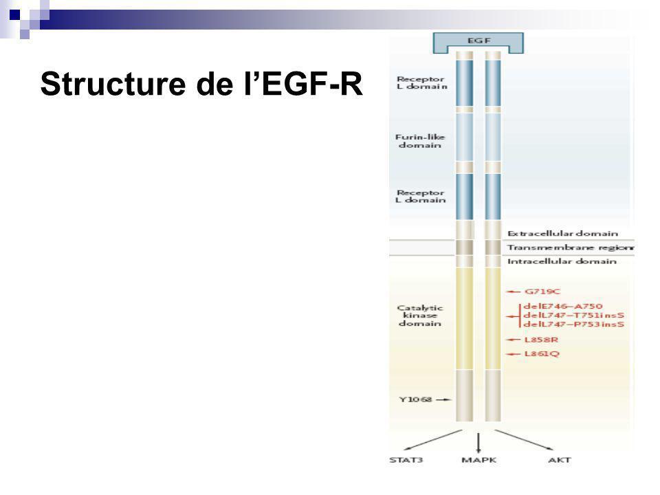 Structure de lEGF-R