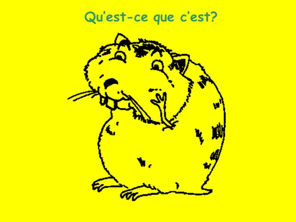 Les animaux (11) Quest-ce que cest?