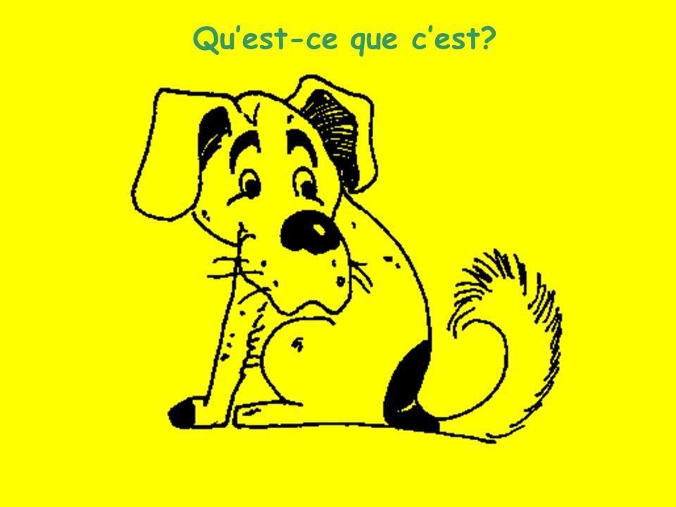 Les animaux (4) Quest-ce que cest?