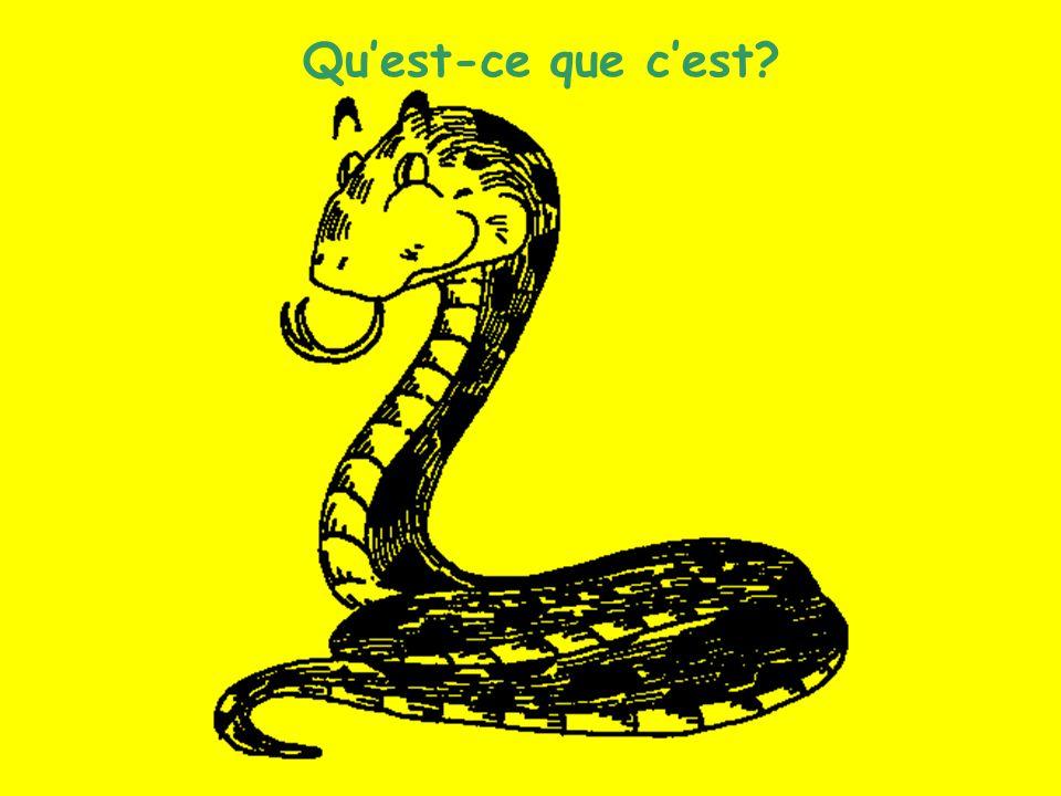 Les animaux (7) Quest-ce que cest?