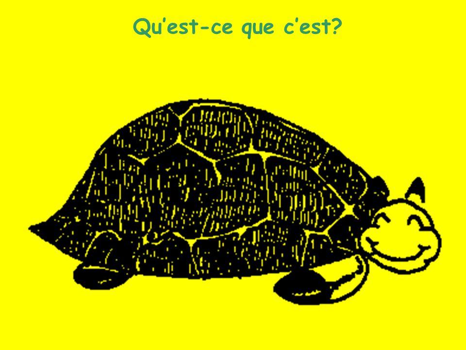 Les animaux (8) Quest-ce que cest?