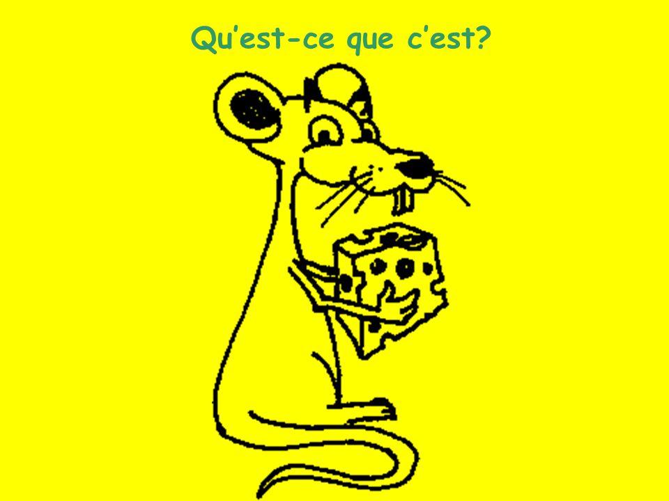Les animaux (9) Quest-ce que cest?