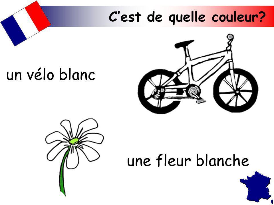 Cest de quelle couleur? une fleur blanche un vélo blanc