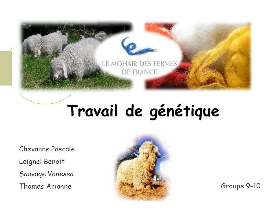 OBJECTIFS Etudier la variabilité des caractères principaux de production de mohair en France, incluant les mesures et lévaluation des toisons.