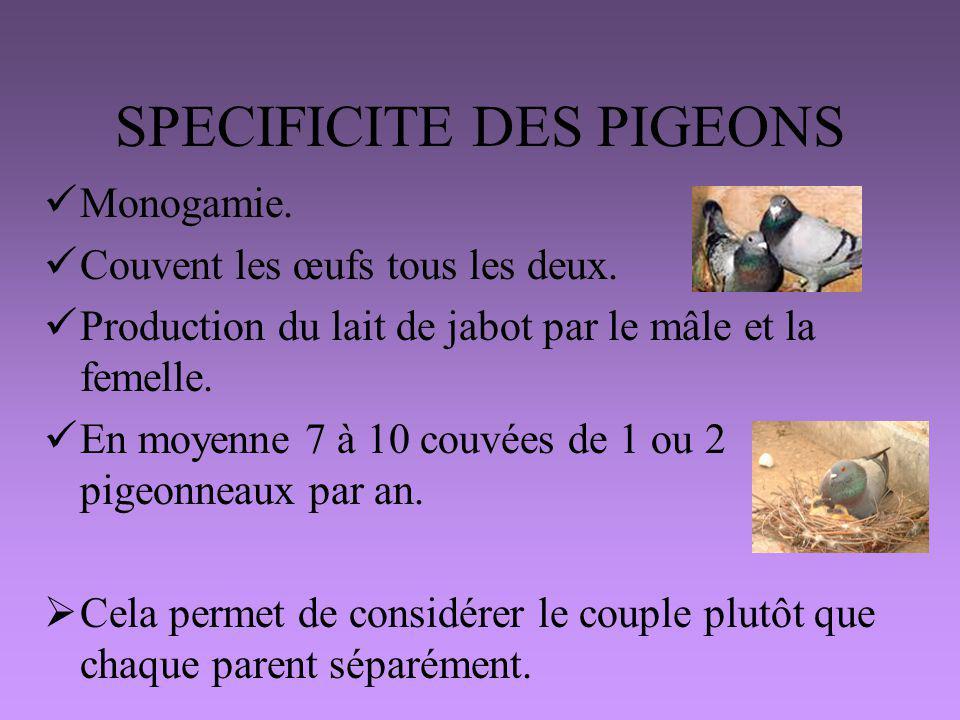 SPECIFICITE DES PIGEONS Monogamie. Couvent les œufs tous les deux. Production du lait de jabot par le mâle et la femelle. En moyenne 7 à 10 couvées de