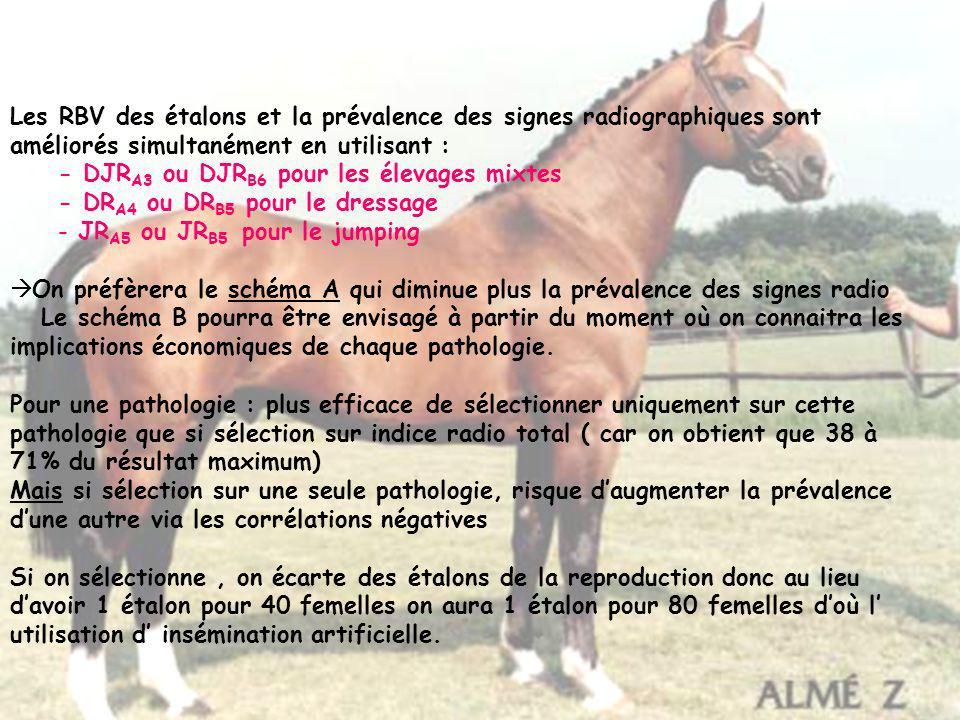 Les RBV des étalons et la prévalence des signes radiographiques sont améliorés simultanément en utilisant : - DJR A3 ou DJR B6 pour les élevages mixte