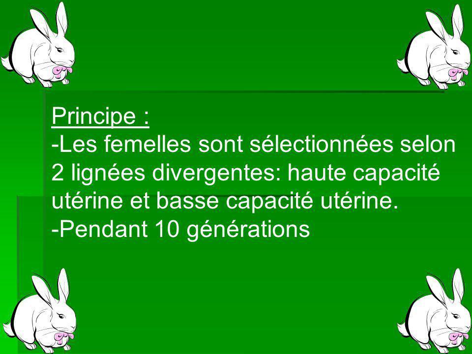 Principe : -Les femelles sont sélectionnées selon 2 lignées divergentes: haute capacité utérine et basse capacité utérine.