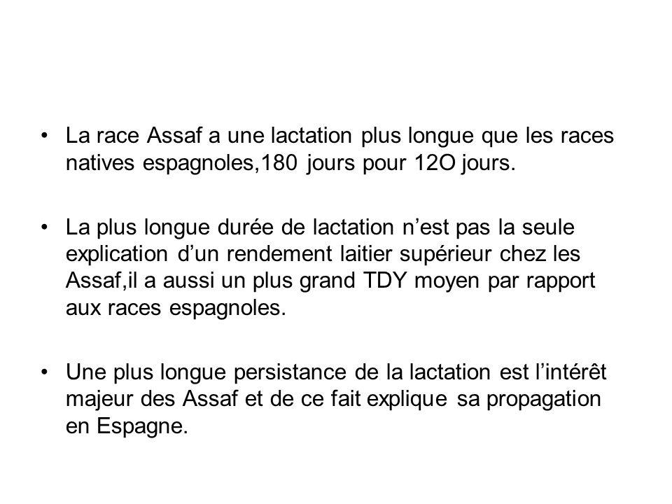 La race Assaf a une lactation plus longue que les races natives espagnoles,180 jours pour 12O jours. La plus longue durée de lactation nest pas la seu