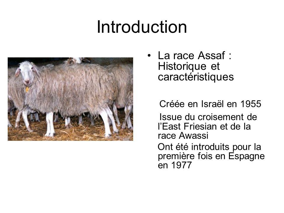 Introduction La race Assaf : Historique et caractéristiques Créée en Israël en 1955 Issue du croisement de lEast Friesian et de la race Awassi Ont été