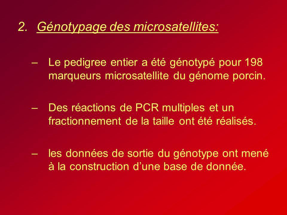 2.Génotypage des microsatellites: –Le pedigree entier a été génotypé pour 198 marqueurs microsatellite du génome porcin. –Des réactions de PCR multipl