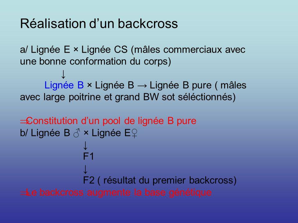 Réalisation dun backcross a/ Lignée E × Lignée CS (mâles commerciaux avec une bonne conformation du corps) Lignée B × Lignée B Lignée B pure ( mâles a