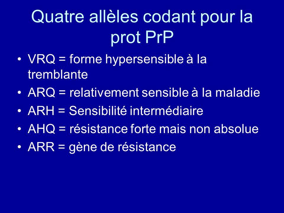 Quatre allèles codant pour la prot PrP VRQ = forme hypersensible à la tremblante ARQ = relativement sensible à la maladie ARH = Sensibilité intermédia