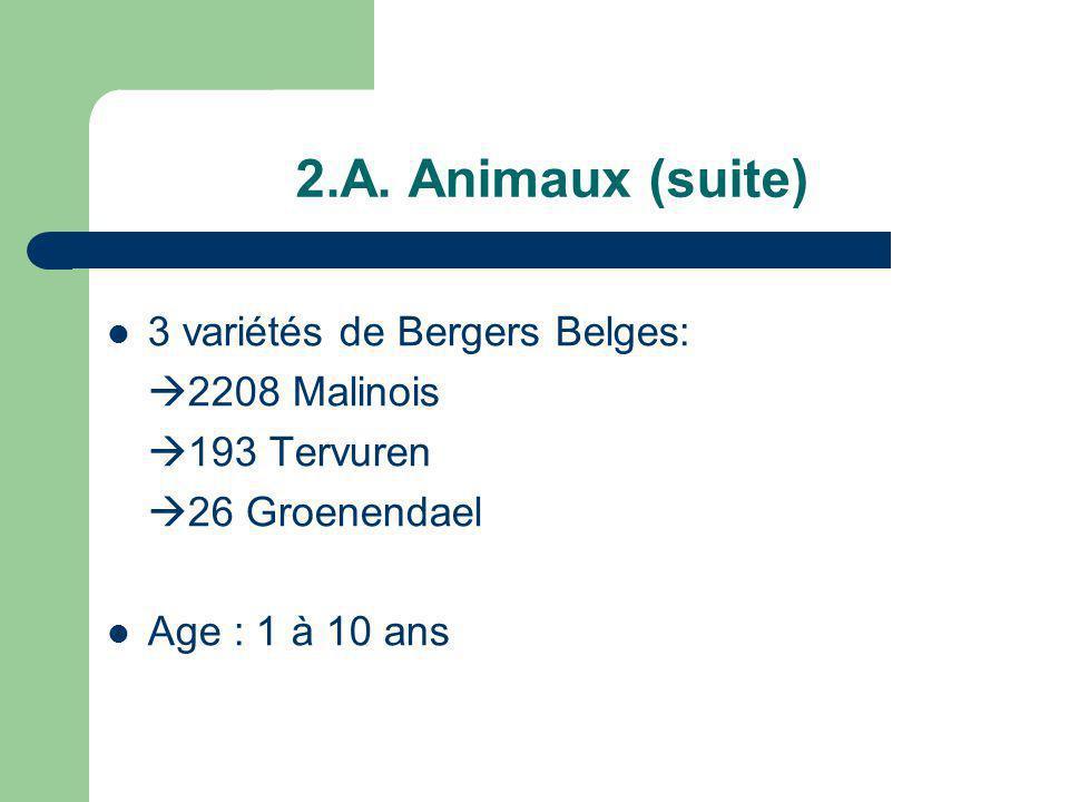 2.A. Animaux (suite) 3 variétés de Bergers Belges: 2208 Malinois 193 Tervuren 26 Groenendael Age : 1 à 10 ans