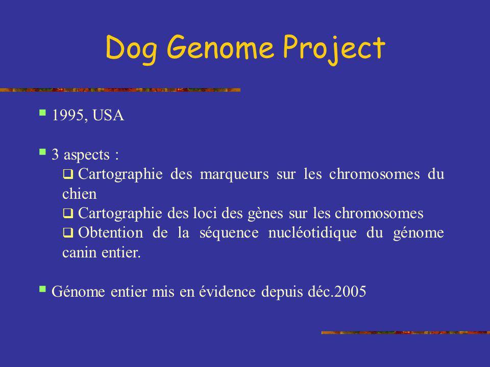 Dog Genome Project 1995, USA 3 aspects : Cartographie des marqueurs sur les chromosomes du chien Cartographie des loci des gènes sur les chromosomes O