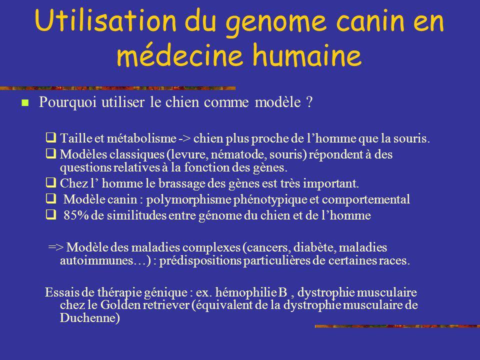 Utilisation du genome canin en médecine humaine Pourquoi utiliser le chien comme modèle ? Taille et métabolisme -> chien plus proche de lhomme que la