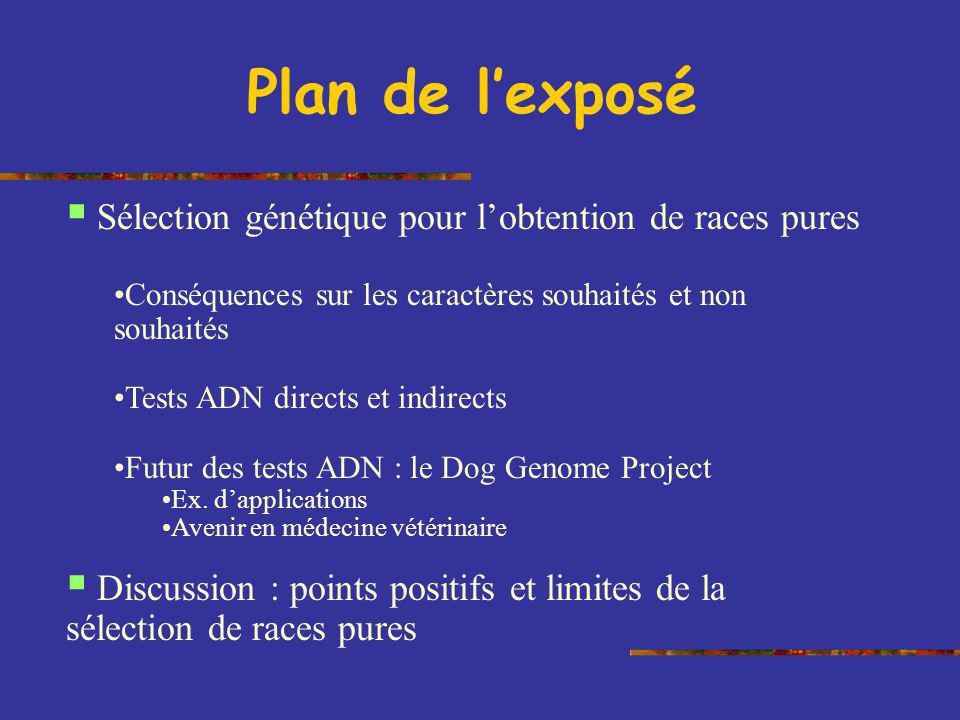 Plan de lexposé Sélection génétique pour lobtention de races pures Conséquences sur les caractères souhaités et non souhaités Tests ADN directs et ind