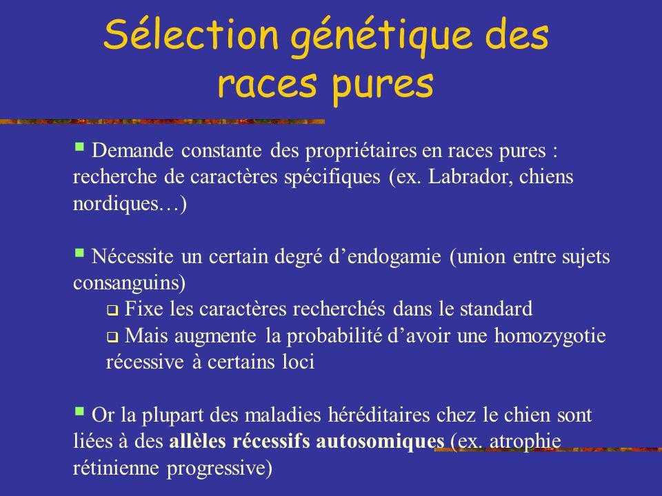 Sélection génétique des races pures Demande constante des propriétaires en races pures : recherche de caractères spécifiques (ex. Labrador, chiens nor
