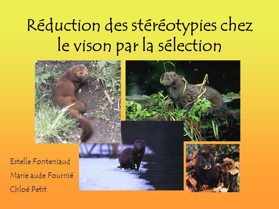 Réduction des stéréotypies chez le vison par la sélection Estelle Fonteniaud Marie aude Fournié Chloé Petit