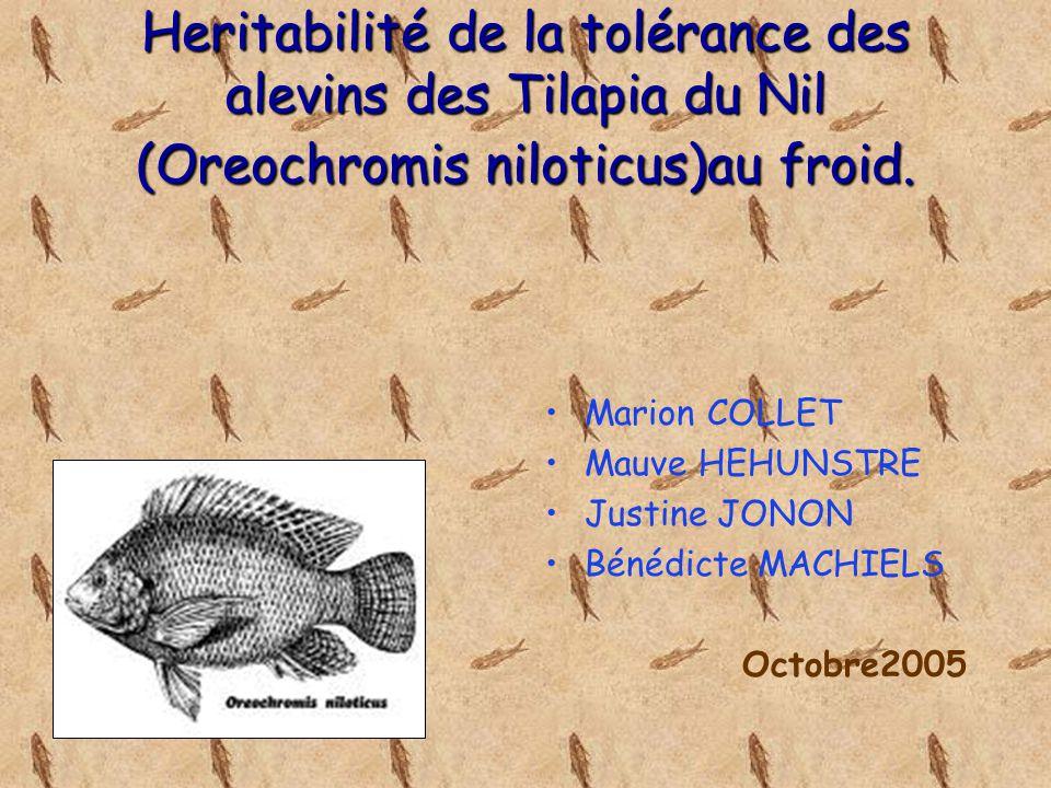 Heritabilité de la tolérance des alevins des Tilapia du Nil (Oreochromis niloticus)au froid. Marion COLLET Mauve HEHUNSTRE Justine JONON Bénédicte MAC
