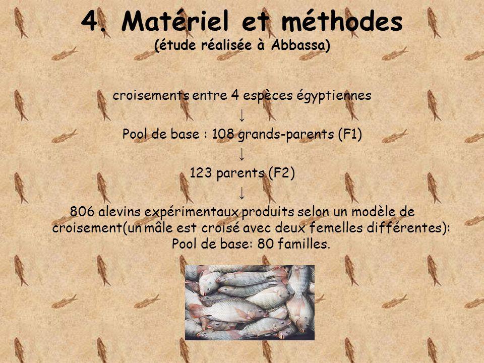 4. Matériel et méthodes (étude réalisée à Abbassa) croisements entre 4 espèces égyptiennes Pool de base : 108 grands-parents (F1) 123 parents (F2) 806