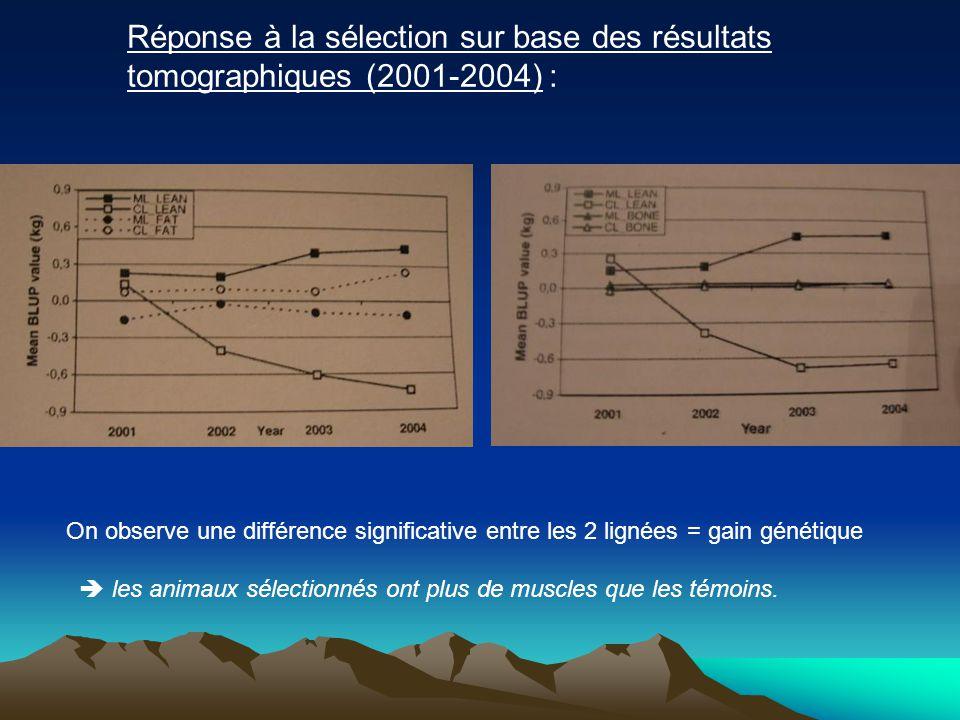 Réponse à la sélection sur base des résultats tomographiques (2001-2004) : On observe une différence significative entre les 2 lignées = gain génétique les animaux sélectionnés ont plus de muscles que les témoins.