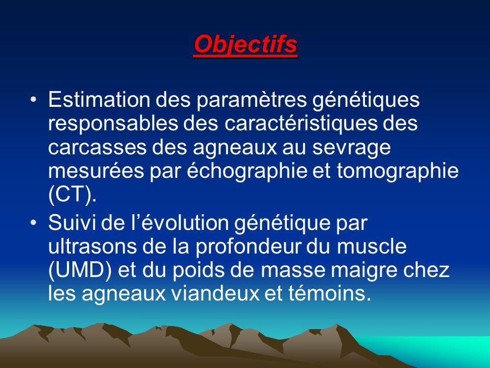 Objectifs Estimation des paramètres génétiques responsables des caractéristiques des carcasses des agneaux au sevrage mesurées par échographie et tomo