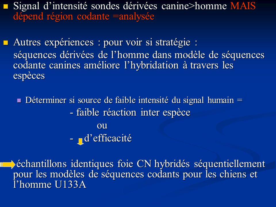Signal dintensité sondes dérivées canine>homme MAIS dépend région codante =analysée Signal dintensité sondes dérivées canine>homme MAIS dépend région