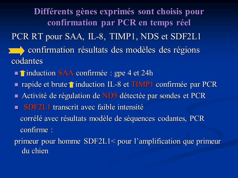 Différents gènes exprimés sont choisis pour confirmation par PCR en temps réel PCR RT pour SAA, IL-8, TIMP1, NDS et SDF2L1 PCR RT pour SAA, IL-8, TIMP