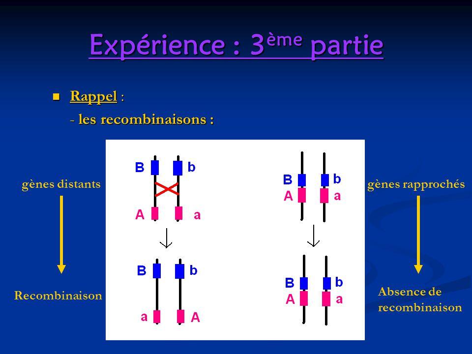 Expérience : 3 ème partie Rappel : Rappel : - les recombinaisons : gènes distantsgènes rapprochés Recombinaison Absence de recombinaison