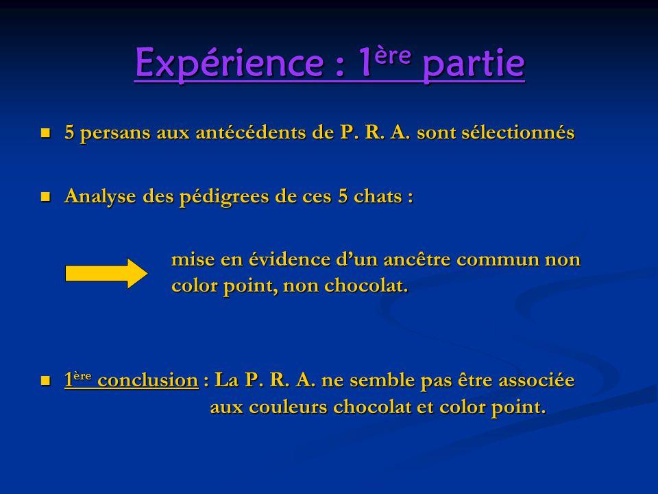 Expérience : 1 ère partie 5 persans aux antécédents de P. R. A. sont sélectionnés 5 persans aux antécédents de P. R. A. sont sélectionnés Analyse des