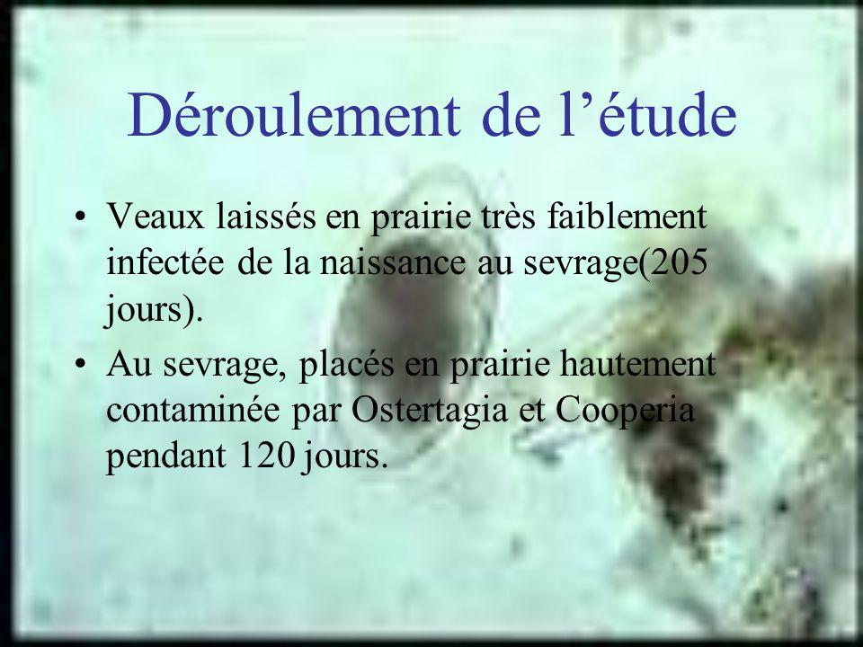 Déroulement de létude Veaux laissés en prairie très faiblement infectée de la naissance au sevrage(205 jours). Au sevrage, placés en prairie hautement