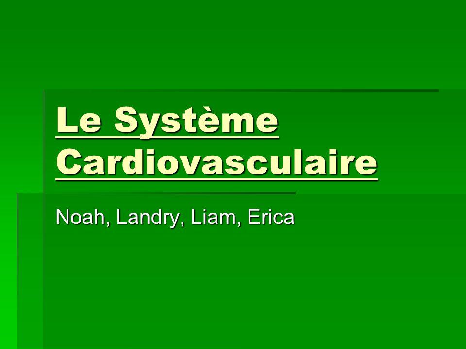 Le Système Cardiovasculaire Noah, Landry, Liam, Erica