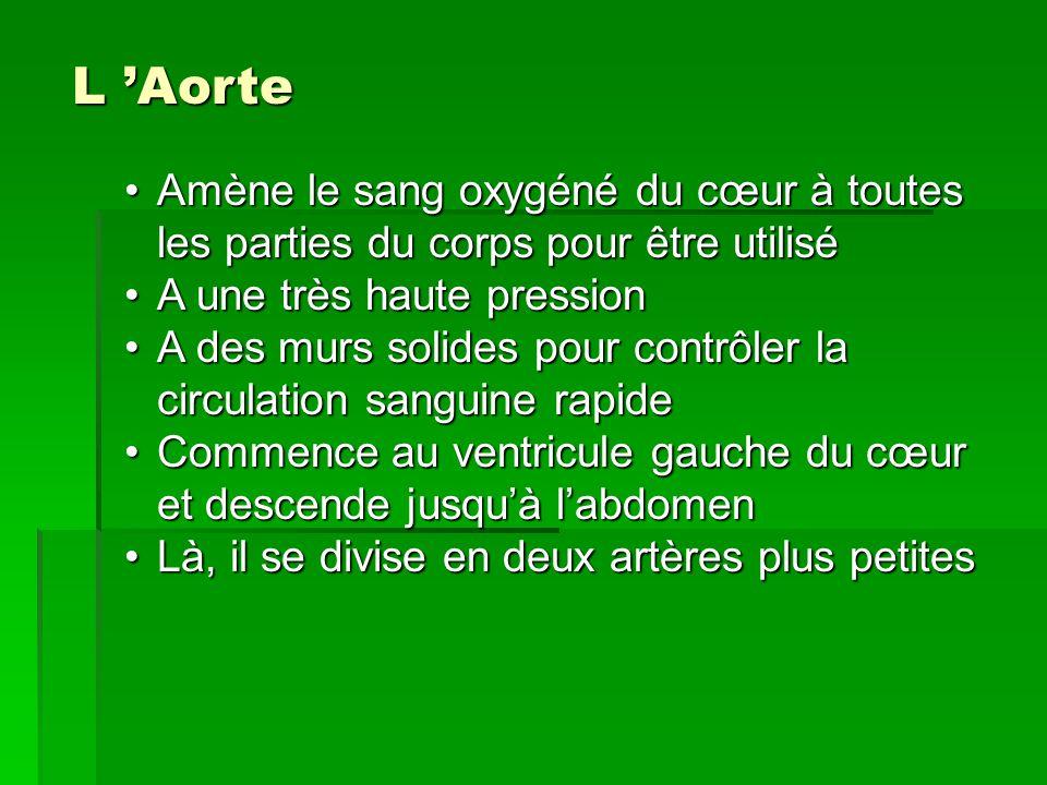 L Aorte Amène le sang oxygéné du cœur à toutes les parties du corps pour être utiliséAmène le sang oxygéné du cœur à toutes les parties du corps pour