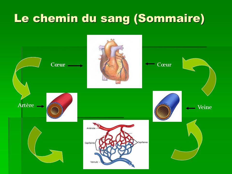 Le chemin du sang (Sommaire) Cœur Artère Cœur Veine Cœur