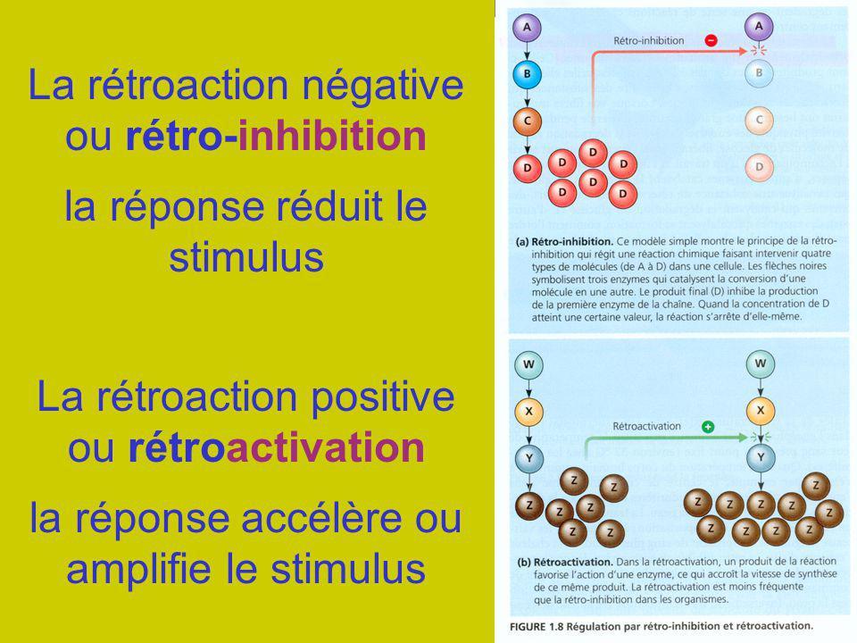 La rétroaction négative ou rétro-inhibition La rétroaction positive ou rétroactivation la réponse réduit le stimulus la réponse accélère ou amplifie l