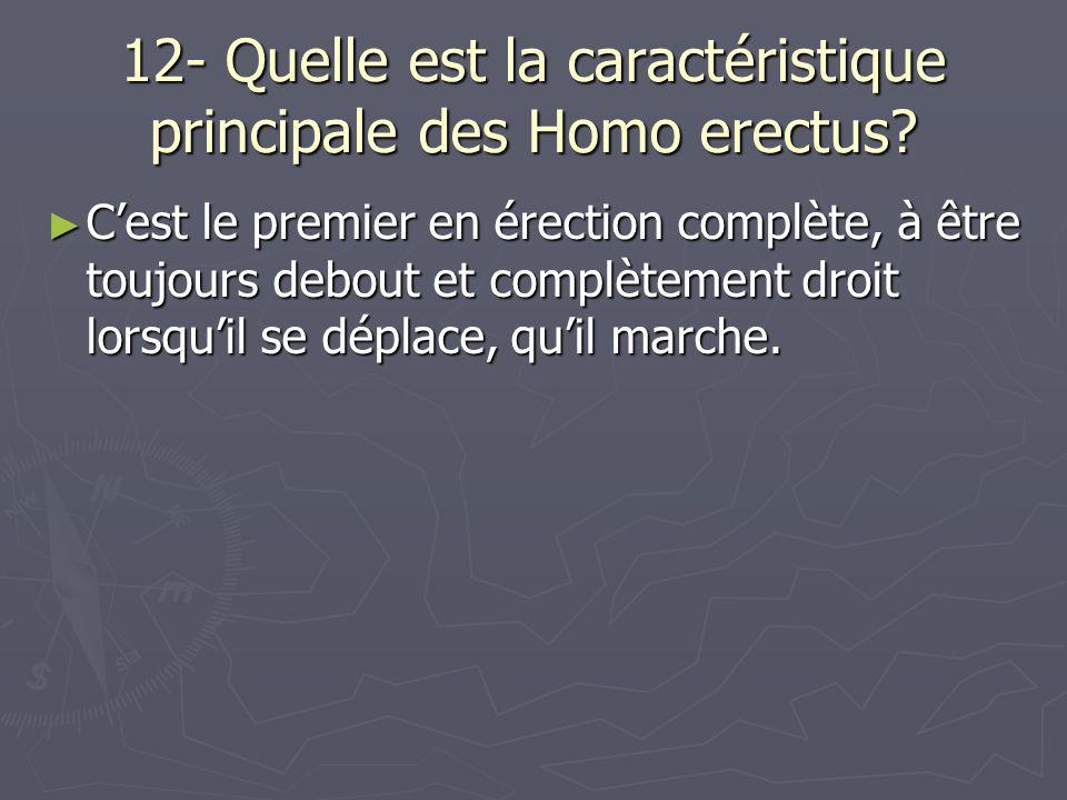 12- Quelle est la caractéristique principale des Homo erectus? Cest le premier en érection complète, à être toujours debout et complètement droit lors