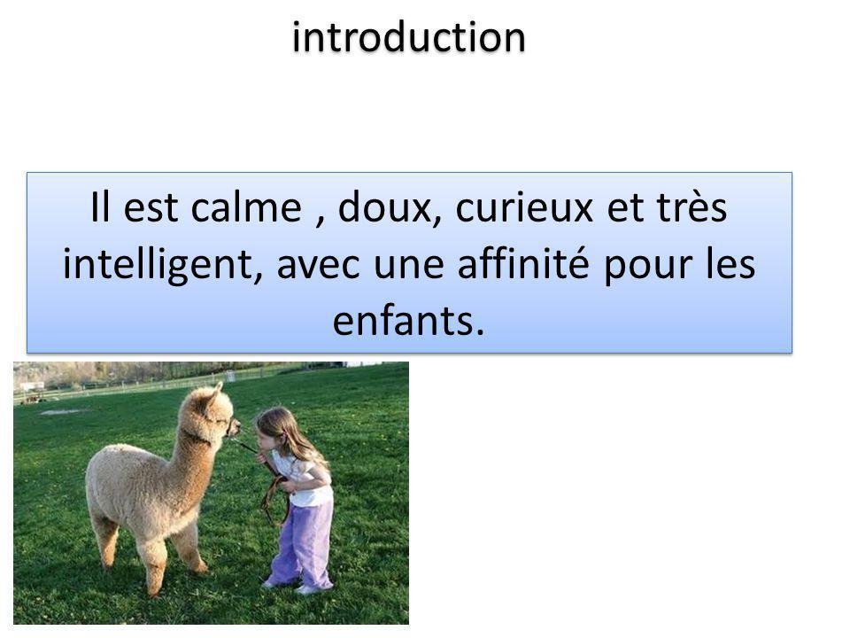 introduction Il est calme, doux, curieux et très intelligent, avec une affinité pour les enfants.