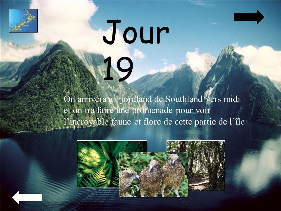 Jour 19 On arrivera à Fjordland de Southland vers midi et on ira faire une promenade pour voir lincroyable faune et flore de cette partie de lîle