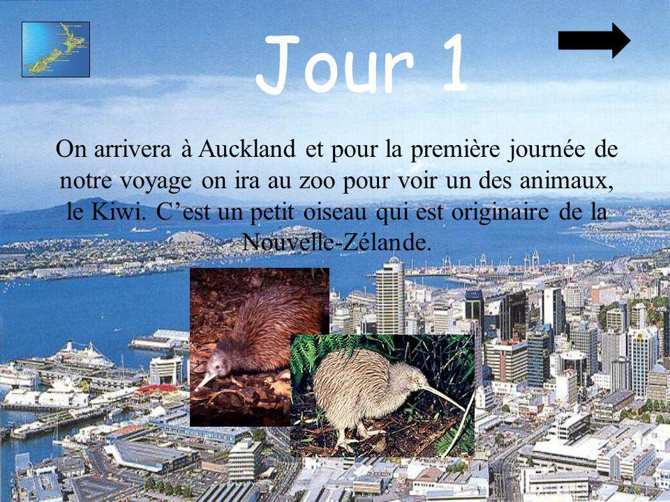Jour 1 On arrivera à Auckland et pour la première journée de notre voyage on ira au zoo pour voir un des animaux, le Kiwi. Cest un petit oiseau qui es