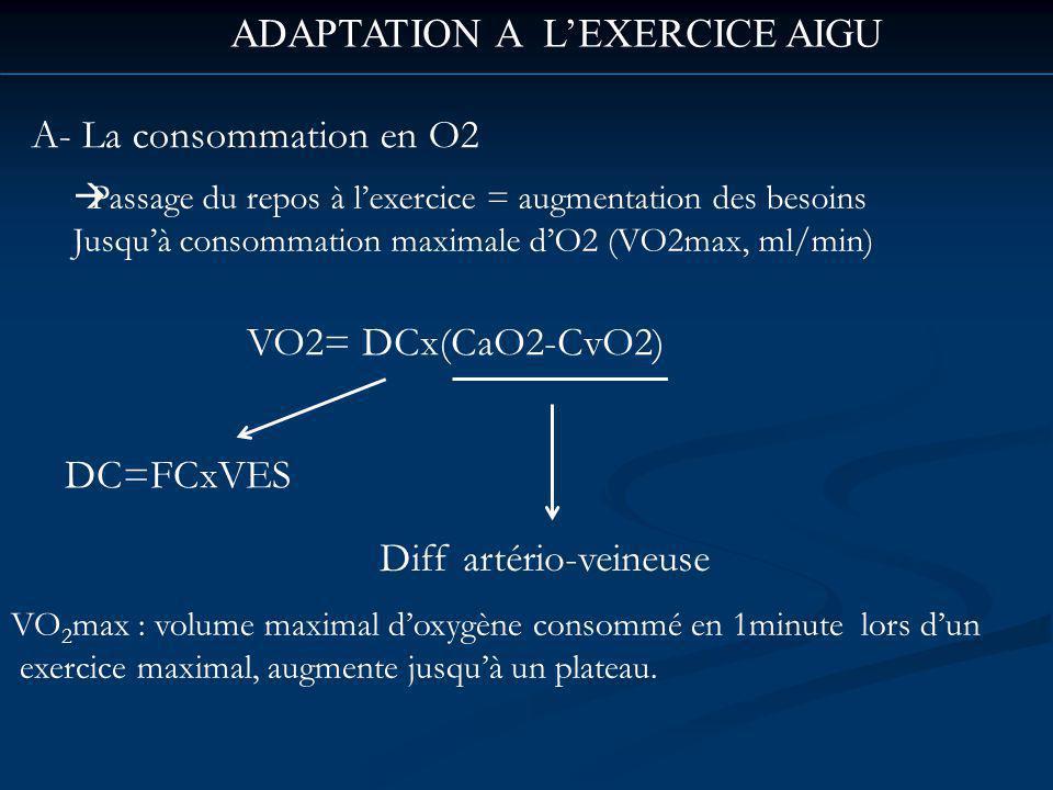ADAPTATION A LEXERCICE AIGU A- La consommation en O2 Passage du repos à lexercice = augmentation des besoins Jusquà consommation maximale dO2 (VO2max, ml/min) VO2= DCx(CaO2-CvO2) Diff artério-veineuse VO 2 max : volume maximal doxygène consommé en 1minute lors dun exercice maximal, augmente jusquà un plateau.