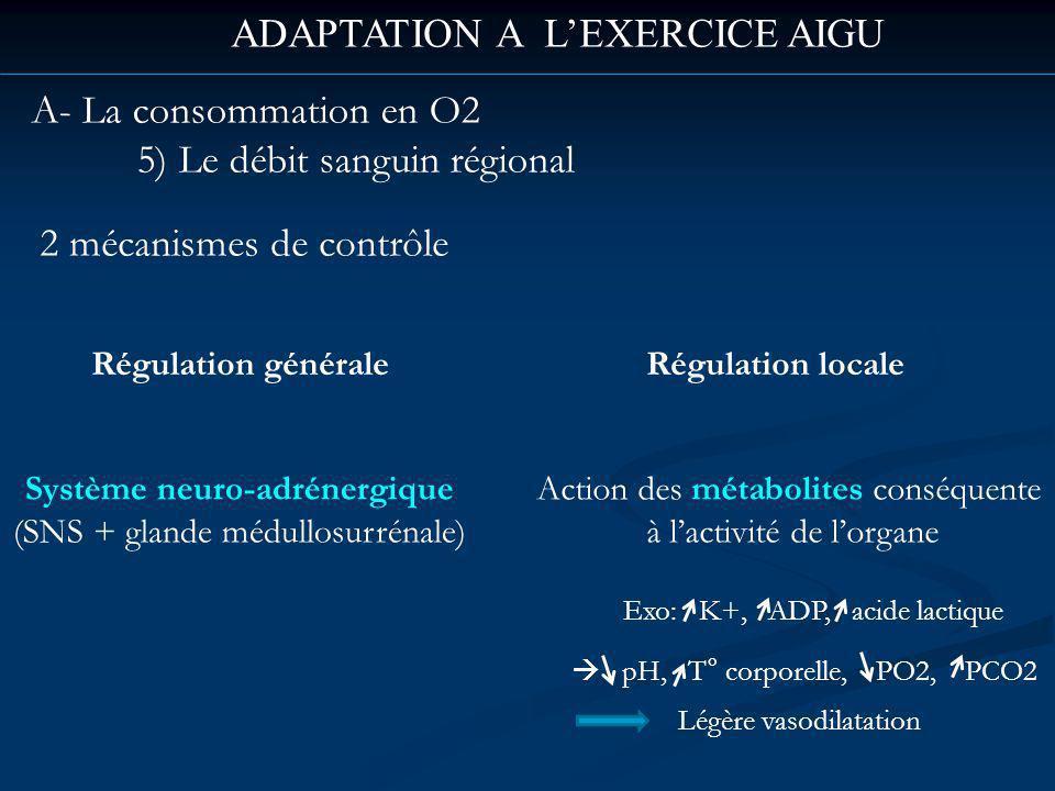 ADAPTATION A LEXERCICE AIGU A- La consommation en O2 5) Le débit sanguin régional 2 mécanismes de contrôle Régulation générale Système neuro-adrénergique (SNS + glande médullosurrénale) Régulation locale Action des métabolites conséquente à lactivité de lorgane Légère vasodilatation Exo: K+, ADP, acide lactique pH, T° corporelle, PO2, PCO2