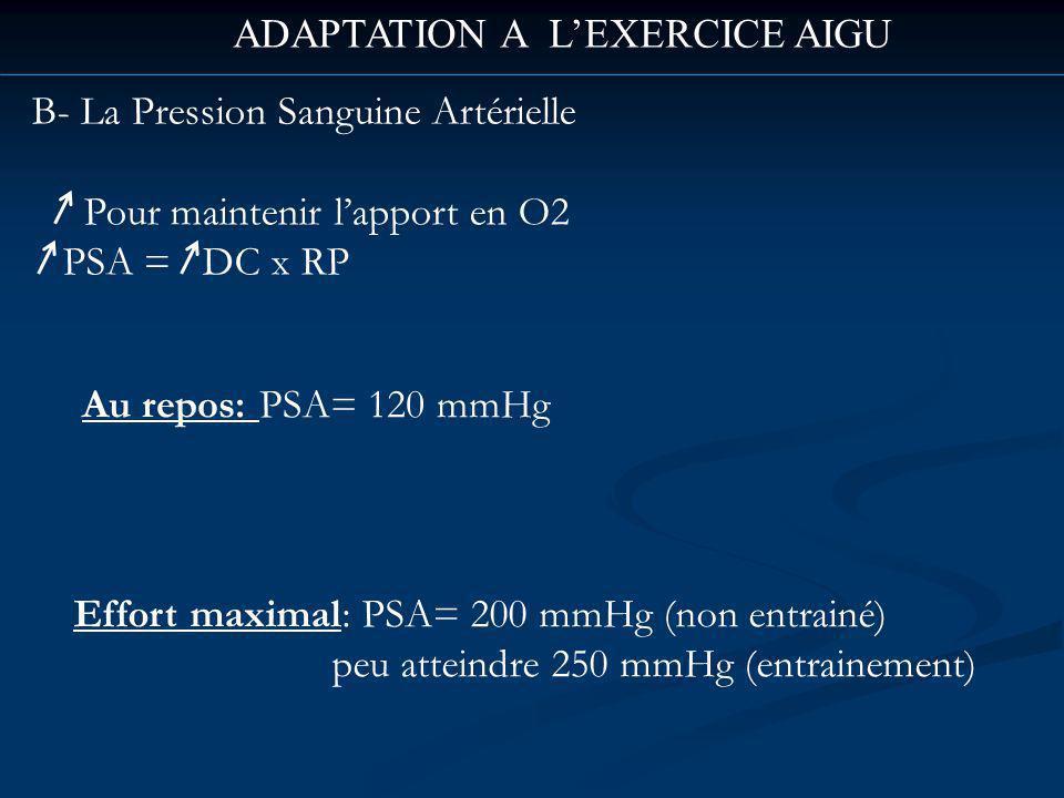 ADAPTATION A LEXERCICE AIGU B- La Pression Sanguine Artérielle Pour maintenir lapport en O2 PSA = DC x RP Au repos: PSA= 120 mmHg Effort maximal: PSA= 200 mmHg (non entrainé) peu atteindre 250 mmHg (entrainement)