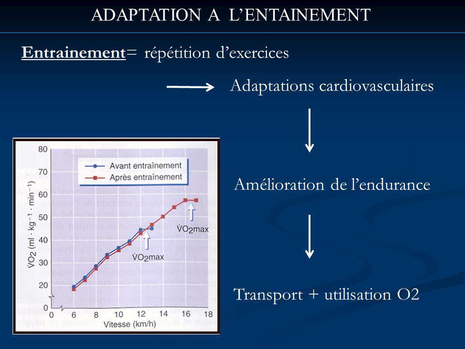 ADAPTATION A LENTAINEMENT Entrainement= répétition dexercices Adaptations cardiovasculaires Amélioration de lendurance Transport + utilisation O2