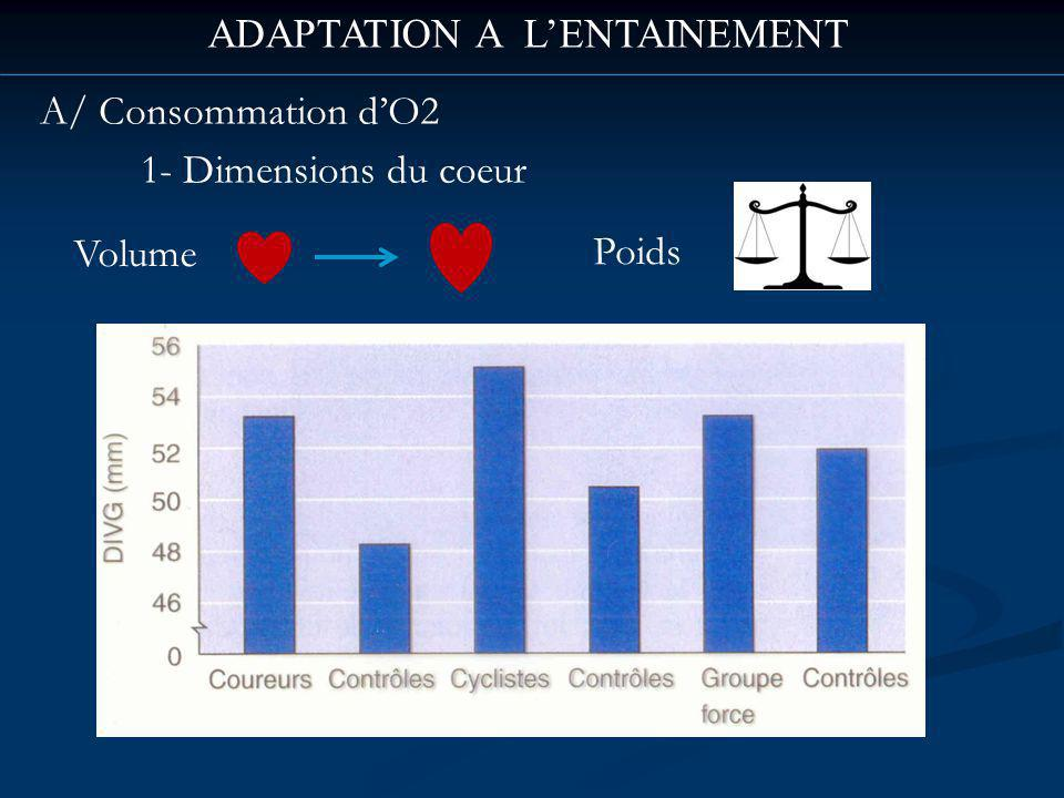 ADAPTATION A LENTAINEMENT A/ Consommation dO2 1- Dimensions du coeur Volume Poids
