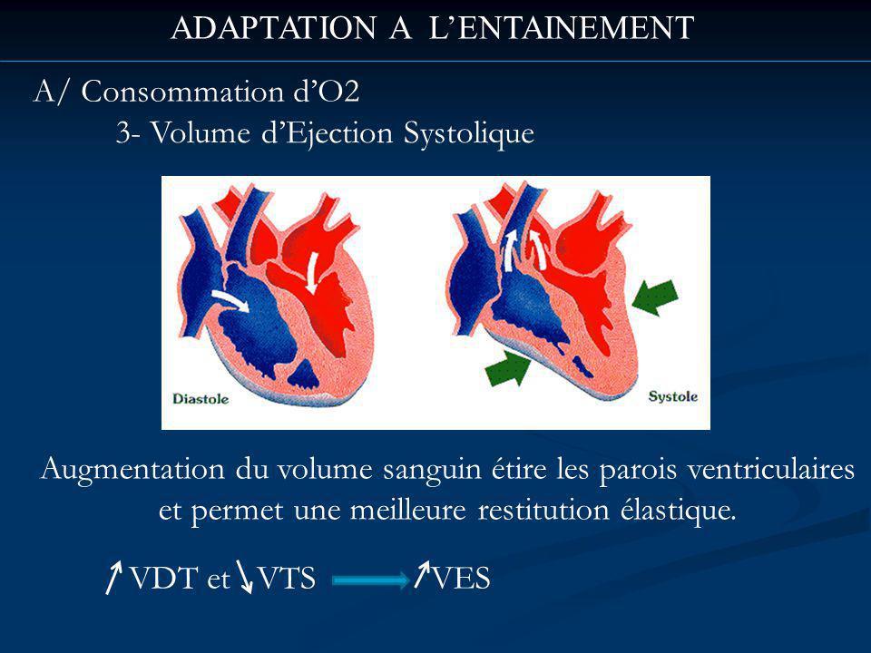 ADAPTATION A LENTAINEMENT A/ Consommation dO2 3- Volume dEjection Systolique Augmentation du volume sanguin étire les parois ventriculaires et permet une meilleure restitution élastique.